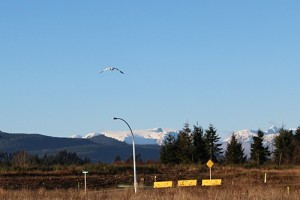 Mountain Views at The Ridge in Courtenay on Vancouver Island