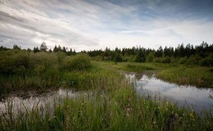 The Lazo Marsh is an important wetland in the Comox Valley, and an environmentally sensitive area.