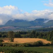 Around Town: Comparing lot and real estate prices between the Comox Valley and Campbell River
